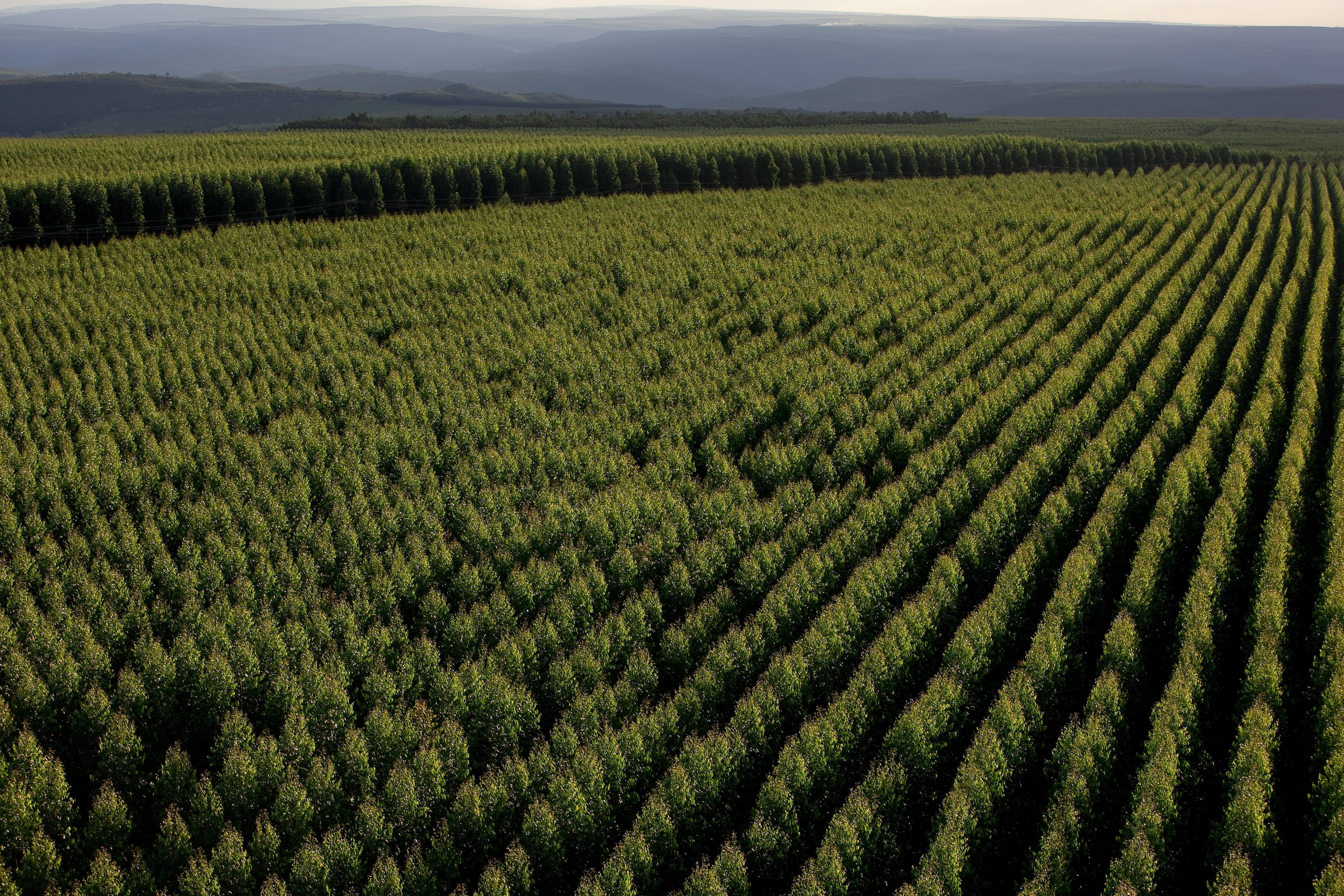 a51c2420329016 Forest Management Planning - Aperam BioEnergia