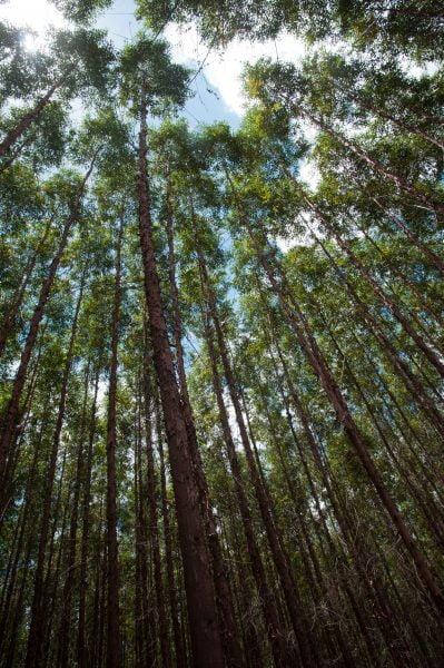 8998_ Relatório 2013 _ Bioenergia _ Florestas