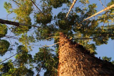 9056_ Relatório 2013  _ Bioenergia _ Florestas