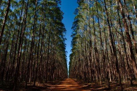 Aperam - Florestas Renovaveis